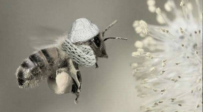 cold%20bees