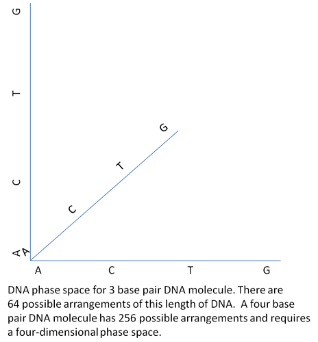 DNA phase space