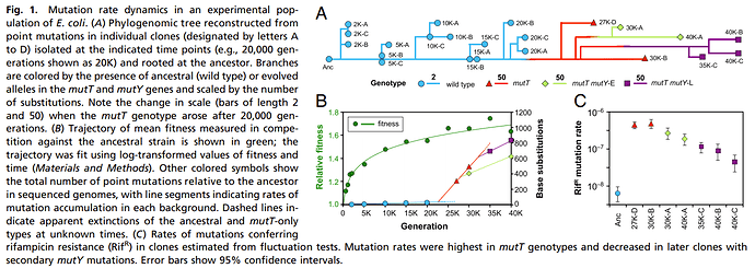 fitness goes up and mutation rate down