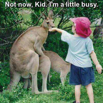 Not-Now-Kangaroo_mini-tiny