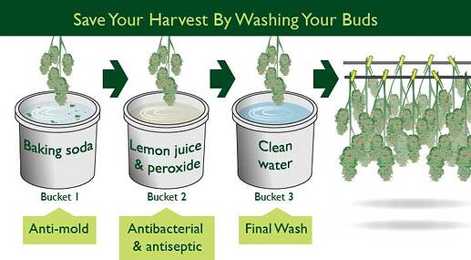 wash-your-buds