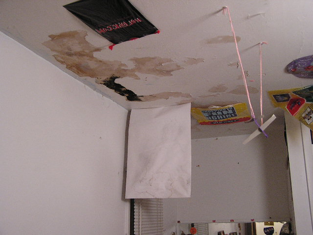 Mold under the posters.JPG