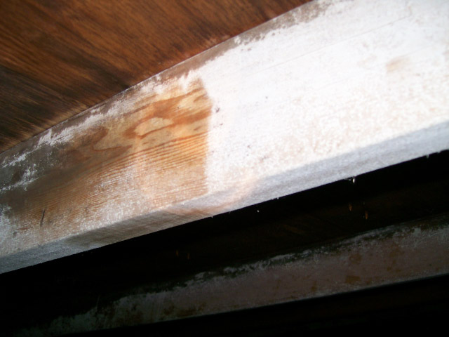 White Powder on Attic Trusses - Ancillary Inspection
