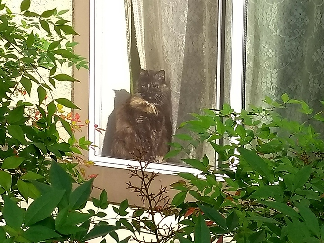 Molly in the window