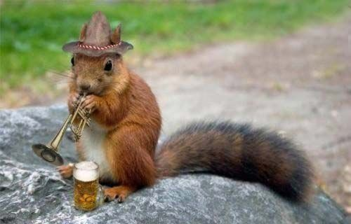 beer squirrel