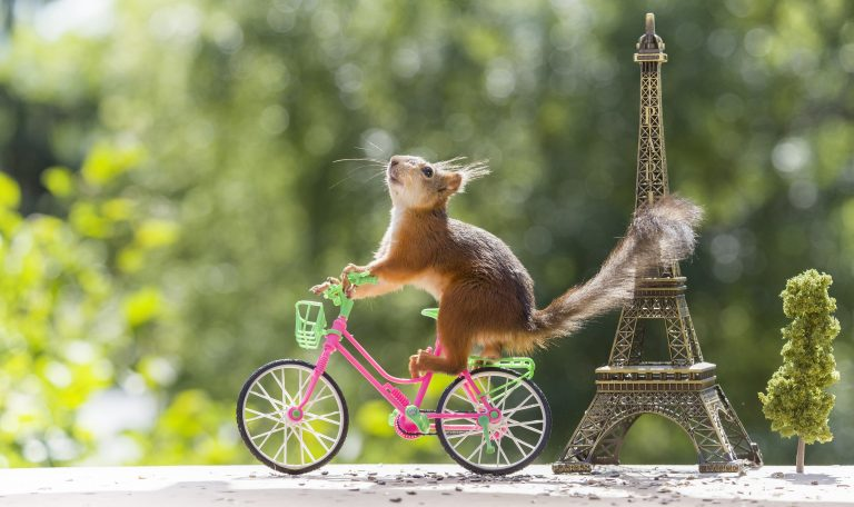 9_CATERS_TOUR_DE_FRANCE_SQUIRRELS_10-768x456